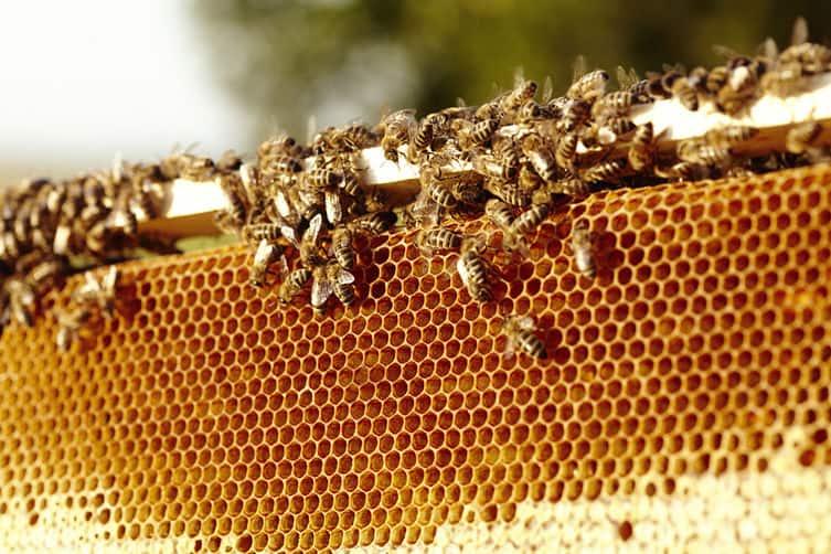 Tỉnh sản xuất nhiều mật ong nhất Việt Nam