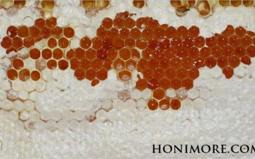 Mật ong chín là gì?