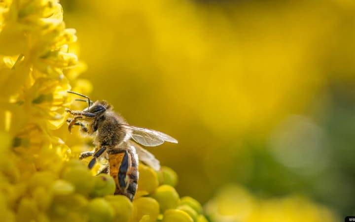 Quốc gia nào sản xuất nhiều mật ong nhất?
