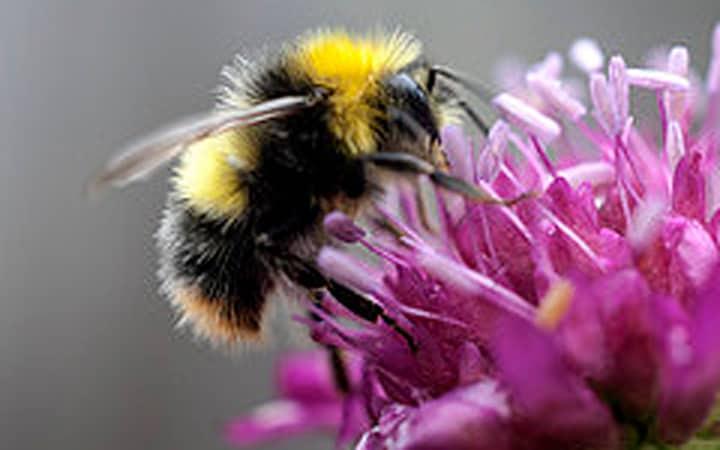 Tại sao có đàn ong dữ hay đốt? Tại sao có đàn ong hiền ít đốt?
