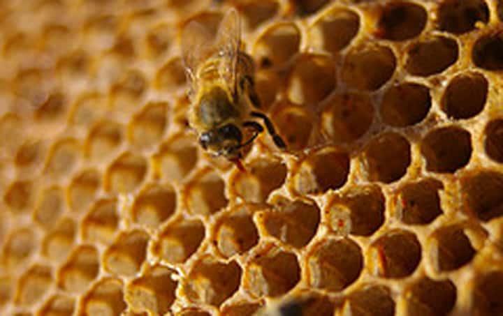 Ong giữ nhiệt độ tổ ổn định như thế nào?