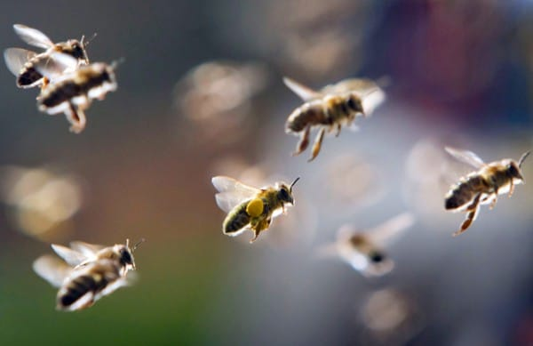 Làm giàu từ nghề nuôi ong mật