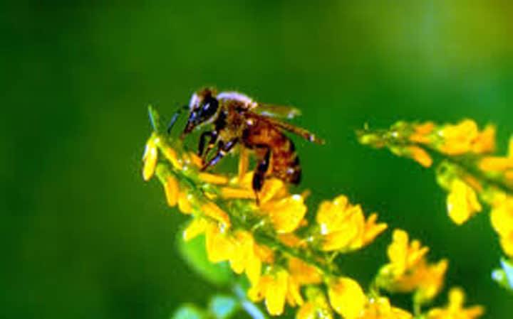 Ong làm điệp viên an ninh nhờ được huấn luyện