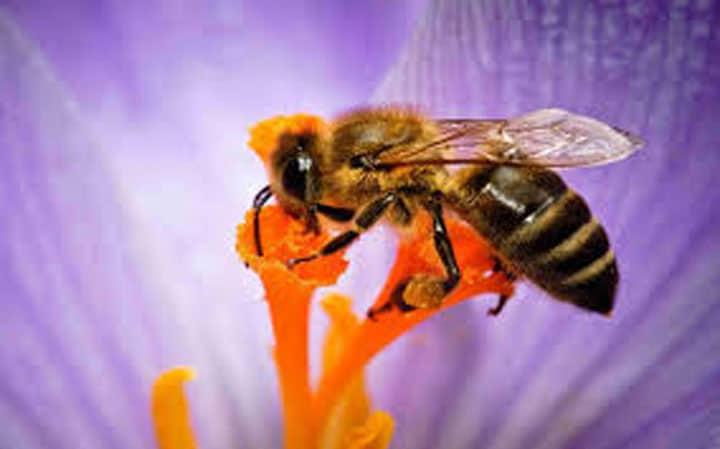 Tuổi thọ các loài ong thế nào?