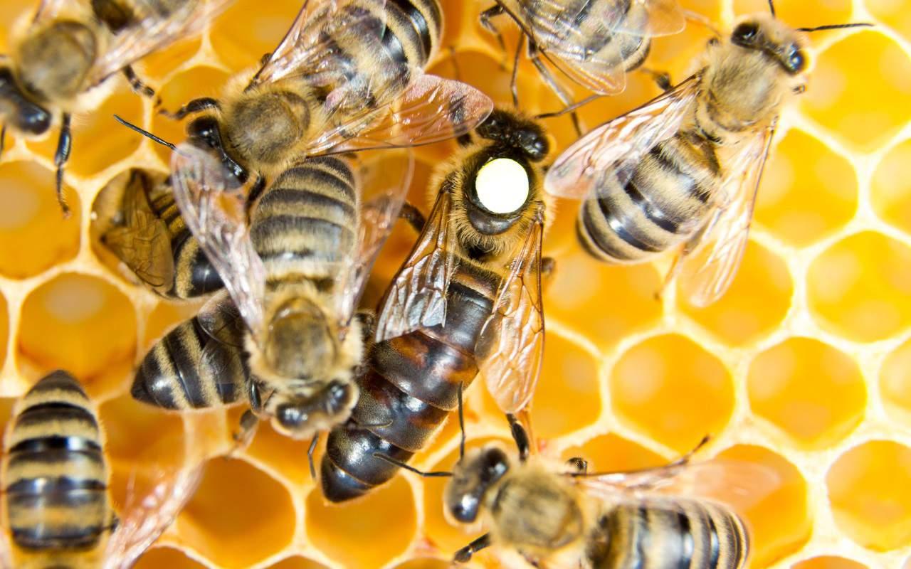 Bài học dân chủ tối ưu của loài ong