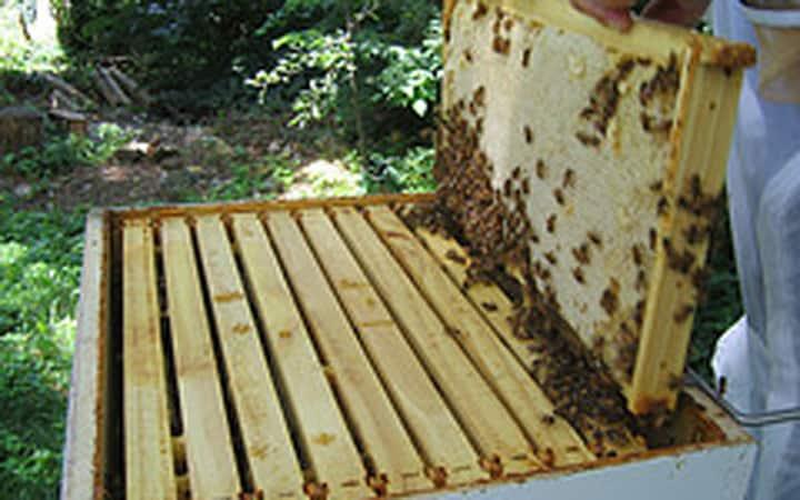 Thùng nuôi ong mật có từ bao giờ? Có bao nhiêu loại thùng nuôi ong mật?