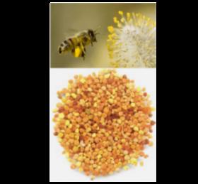 Phấn hoa Honimore - sắp ra mắt